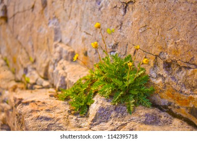 Flower growing in crevice