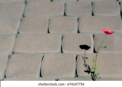 A flower growing on the sidewalk