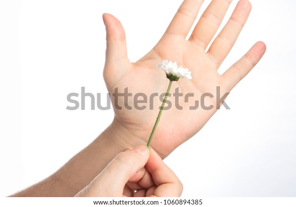 Flower in hand. Chamomile in the man's hand. Free space.