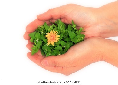 flower in the hands of a woman