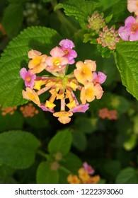 flower hd walpaper