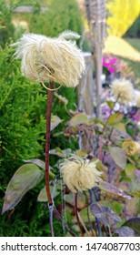Flower Head with Funky Hairdo