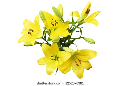 flower head of lily in a white background