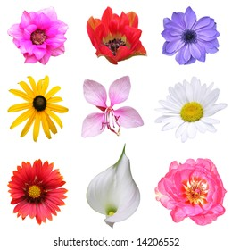 Flower heads collection isolated on white