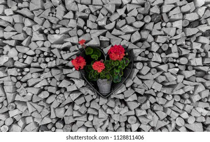 Flower Heart In The Middle Of A Woodstack