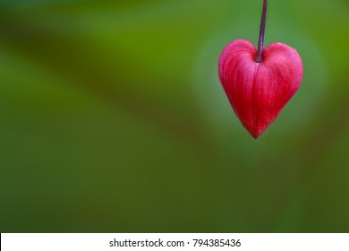 Flower in heart shape. Green natural background