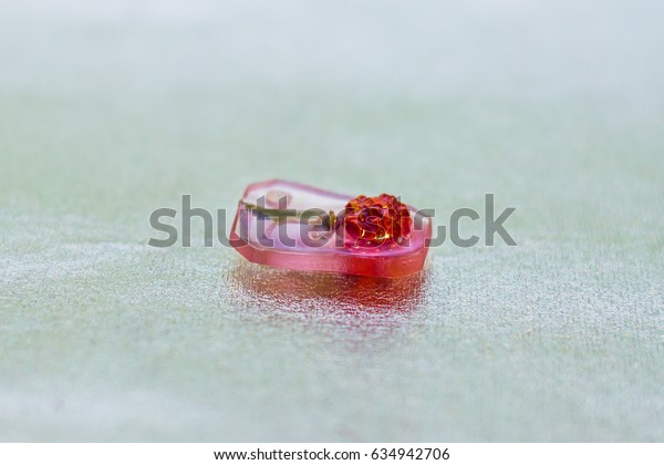 Flower inside of crystal made of epoxy resin close-up with bokeh on background shallow depth of field