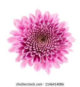 flower isolated on white background beautiful close-up