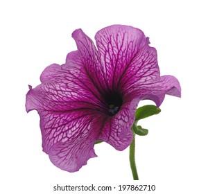 flower isolated on white background