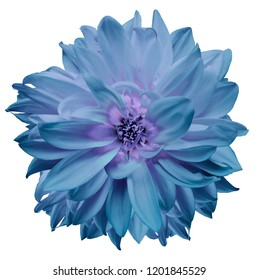 flower isolated. turquoise dahlia on a white background. Flower for design. Closeup. Nature.
