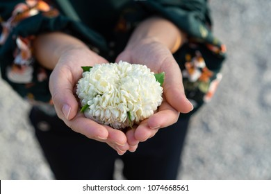 Flower Jasmine White In mother hands