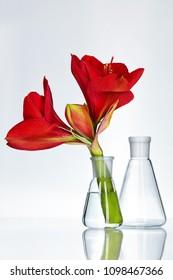 Flower In Laboratory Glass