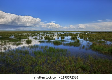 Flower Lake in Aba, Sichuan Province, China. HuaHu, Zoige Marsh, Ruoergai Grassland. Flowers, grasslands, swamps and lakes - known as one of the most beautiful wetland areas in China. Natural Scenery