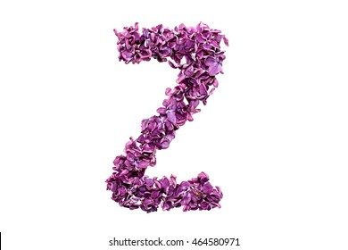 Flower letter lilac or purple color isolated on white background . Letter Z