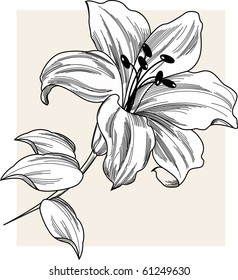 Flower Lily Illustration flower lily