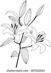 Flower lily sketch.  Flourish posy with daisy bloom.