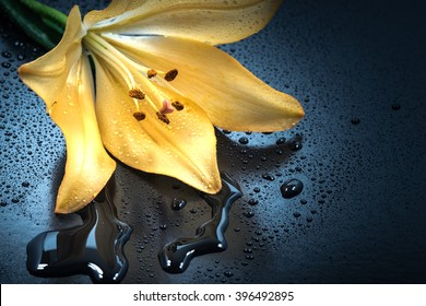 Flower, lily, water droplets, close-up, macro.