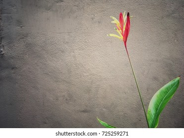 Flower with long stalk at the vintage wall