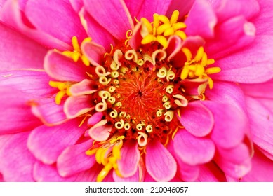 Flower Looks Like a Pink Explosion