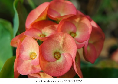Flower for lucky,Poi Sean