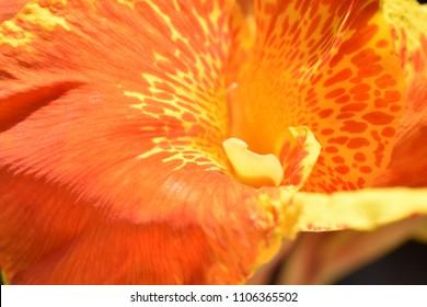 Flower Macro Wallpaper