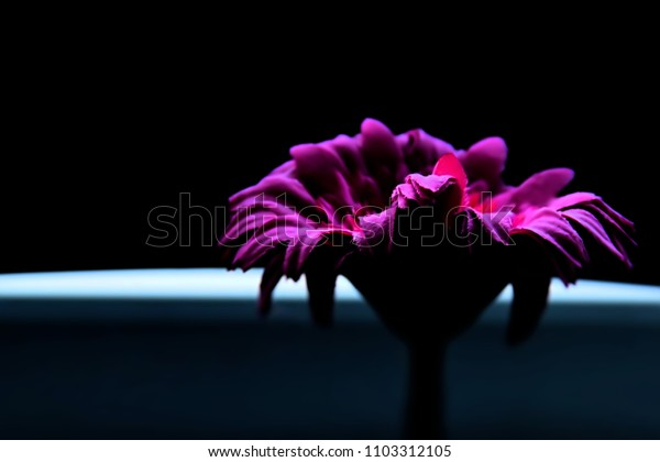 Flower made of fabric in low light. This image was blurred or selective focus.