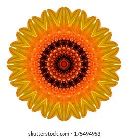 Flower mandala isolated on white background