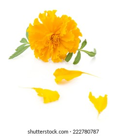 Orange marigold flowers images stock photos vectors shutterstock flower of marigold and petals on a white background mightylinksfo