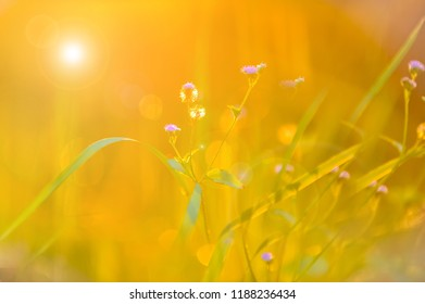 Flower of Meadow with Bokeh for Background textures. Blurry Flower softly and romance