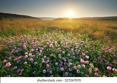 Flower in meadow. Landscape nature composition.
