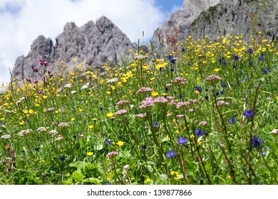A flower meadow in the mountains