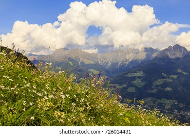 flower meadow with mountains in south tyrol, italy