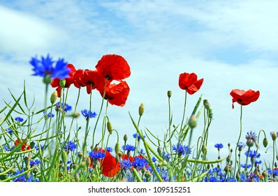 flower meadow with poppies