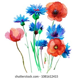 Flower meadow with poppies. Postcard painted red poppy with leaves lively watercolor paint for your design.