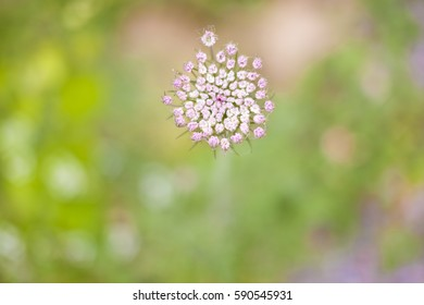 flower in meadow with a selective focus