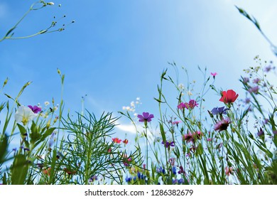 Flower meadow in summer with different colorful flowers