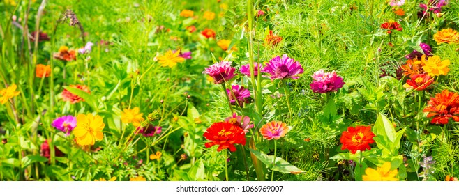 Flower meadow with summer flowers as background - Panorama