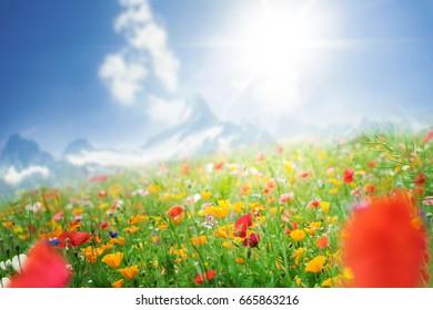Flower meadow in sunshine