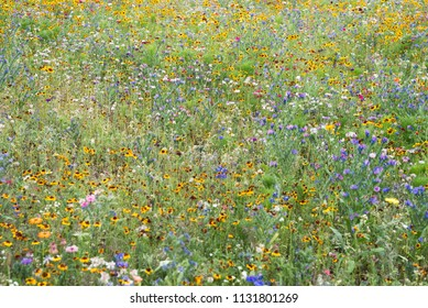 Flower meadow wild blooming blossom countryside park various plants
