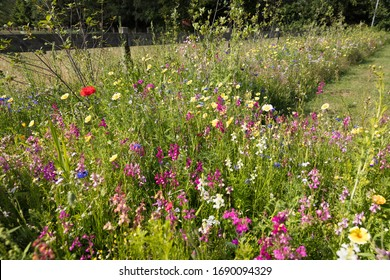 Flower meadow with wild flowers in June