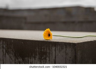 Flower in Memorial to the Murdered Jews of Europe in Berlin City, Germany