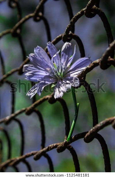 Flower in a metal grid, bright sunny background. Conceptual sketch