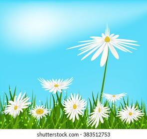 Flower nature background. Chamomile bloom