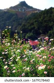 Blume in der Natur auf dem Hügel