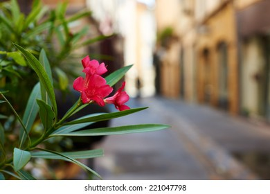 Flower in an old street of ancient Aix en Provence town, South France