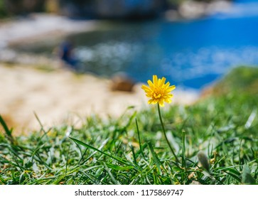 Flower on the beach in Agva, Kilimli cove in istanbul ,Agva 2018