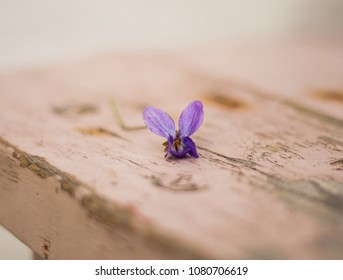 Flower on the bench