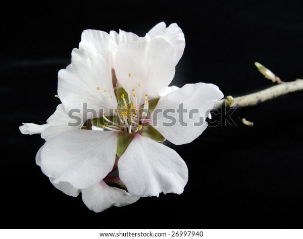 flower on a black background