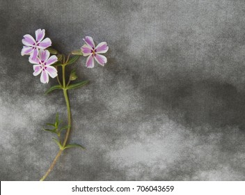 Flower on black and white background - condolence card
