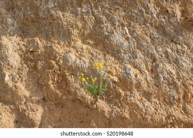 Flower on the cliff